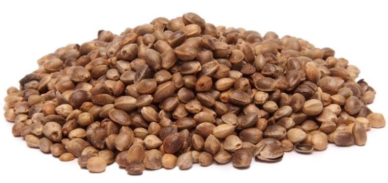 12.شاهدانه - منبع پروتئین گیاهی