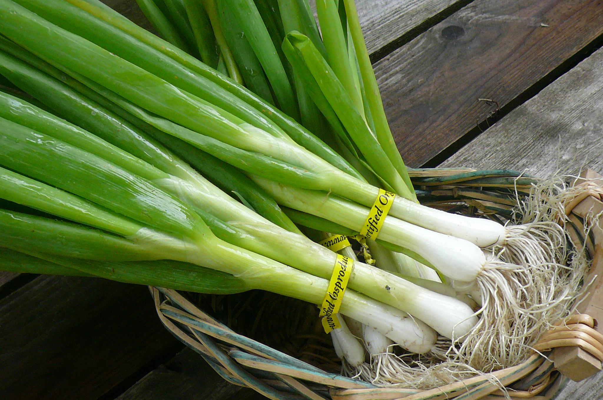 35. پیازچه- منبع پروتئین گیاهی