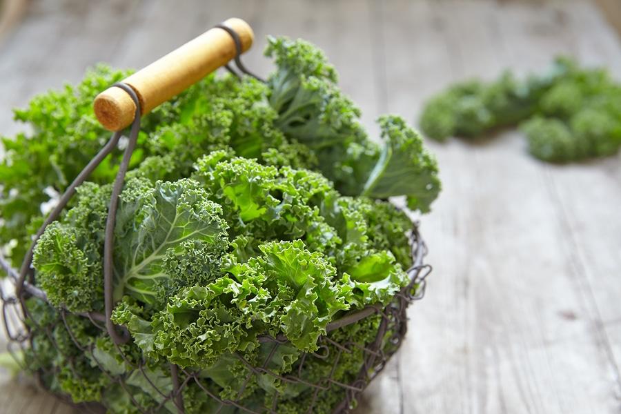 22. کلم پیچ- منبع پروتئین گیاهی