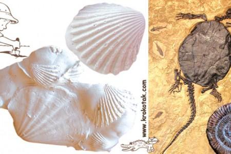 کاردستی ساخت صدف های سفید با گچ