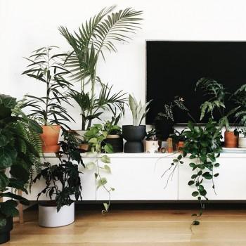 دکوراسیون منزل و گیاهان خانگی و آپارتمانی مقاوم