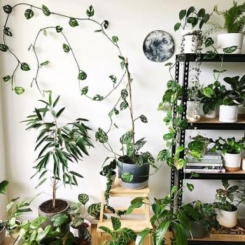 چینش گیاهان آپارتمانی در دکوراسیون منزل - 56 ایده تصویری